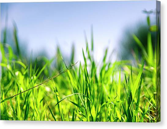 Canvas Print featuring the photograph Grass by Nikos Stavrakas