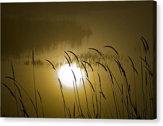 Grass Silhouettes Canvas Print