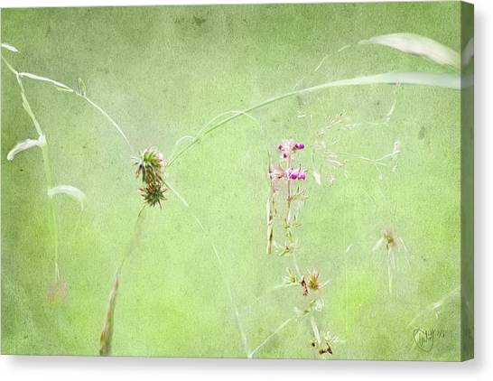 Grasses And Blooms Canvas Print