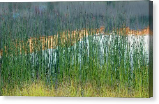 June Lake Canvas Print - Grasses And Reflections by Joseph Smith