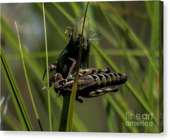 Grasshopper 2 Canvas Print