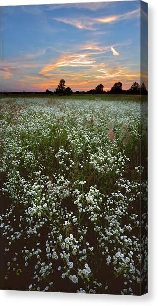 Canvas Print featuring the photograph Grassland Blossom. Lebedivka, 2018. by Andriy Maykovskyi
