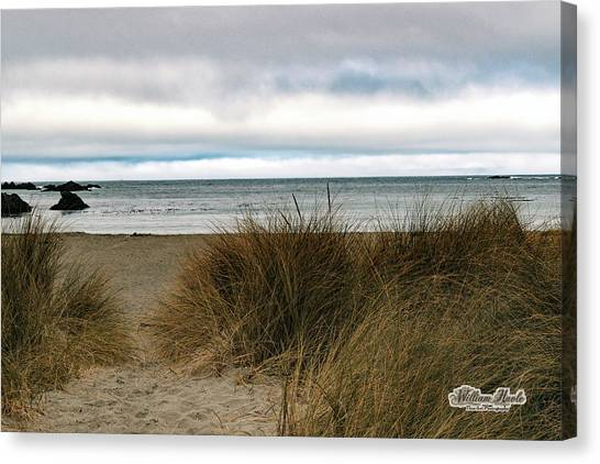Canvas Print featuring the photograph Grassy Beach by William Havle