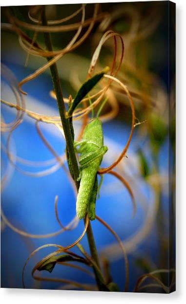 Grasshoppers Canvas Print - Grassy Hopper by Chris Brannen