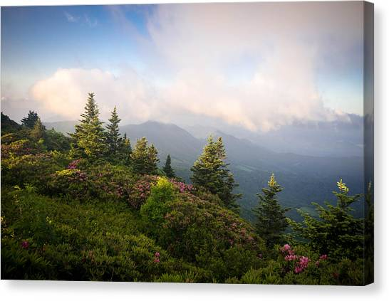 Grassy Ridge Rhododendron Bloom Canvas Print