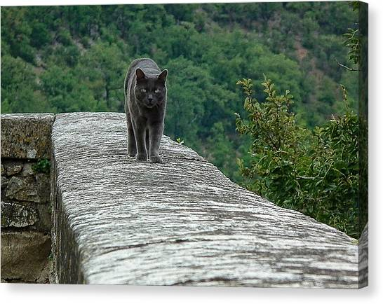 Gray Cat Prowling Canvas Print
