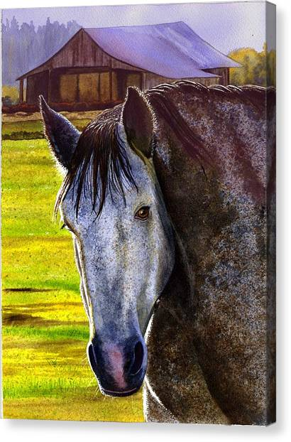 Gray Horse Canvas Print by Catherine G McElroy