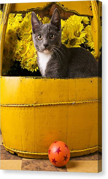 Small Mammals Canvas Print - Gray Kitten In Yellow Bucket by Garry Gay
