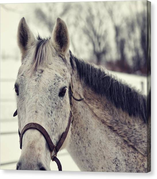 Gray On Winter White Canvas Print by JAMART Photography