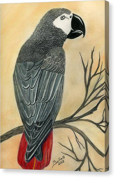 Gray Parrot Canvas Print