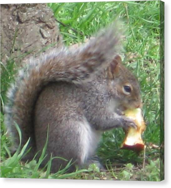 Gray Squirrel With An Apple Core Canvas Print