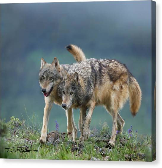 Gray Wolves Canvas Print