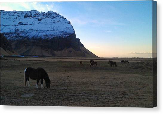 Grazing At Dawn Canvas Print