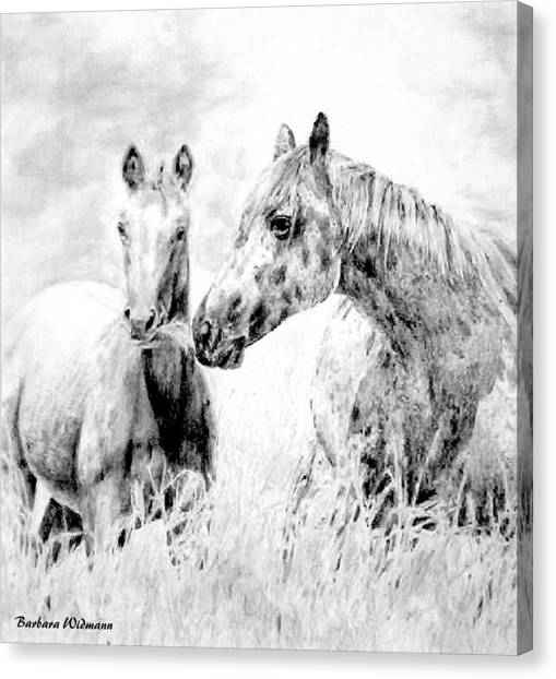Grazing Canvas Print by Barbara Widmann