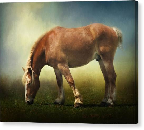 Draft Horses Canvas Print - Grazing Belgian by David and Carol Kelly