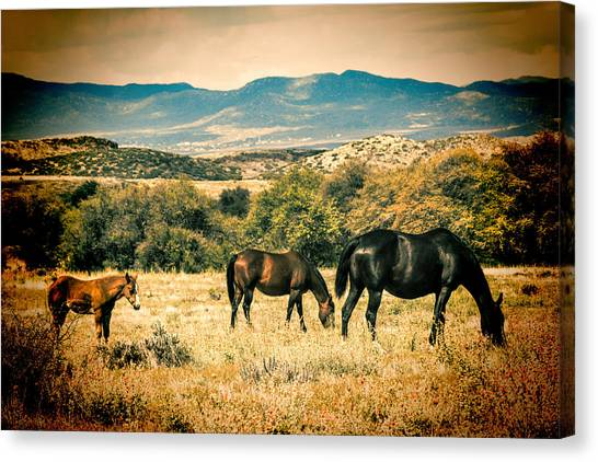 Grazing Canvas Print