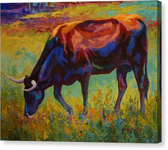 Longhorn Canvas Print - Grazing Texas Longhorn by Marion Rose