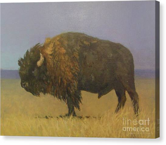 Great American Bison Canvas Print