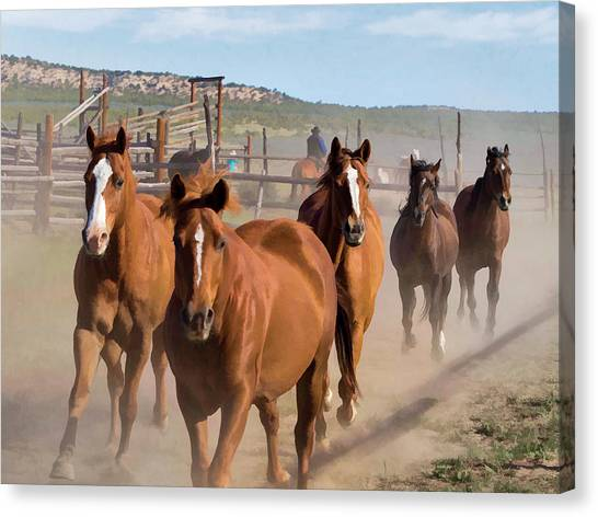 Great American Horse Drive - Coming Into The Corrals Canvas Print