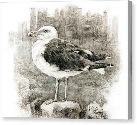 Great Black-backed Gull Canvas Print