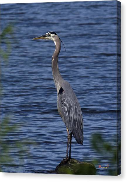 Great Blue Heron Dmsb0001 Canvas Print