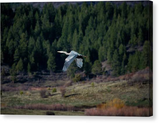 Canvas Print featuring the photograph Great Blue Heron In Flight by Jason Coward