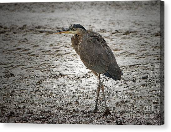 Great Blue Heron In The Snow Canvas Print by Sharon Talson