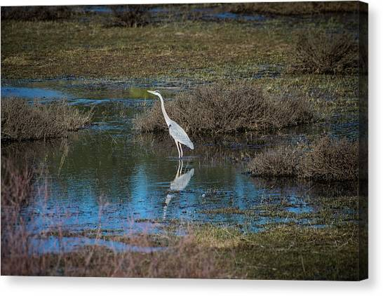 Canvas Print featuring the photograph Great Blue Heron by Jason Coward