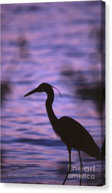 Great Blue Heron Photo Canvas Print