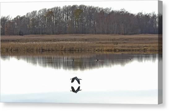 Great Blue Heron Over Glassy Water Canvas Print