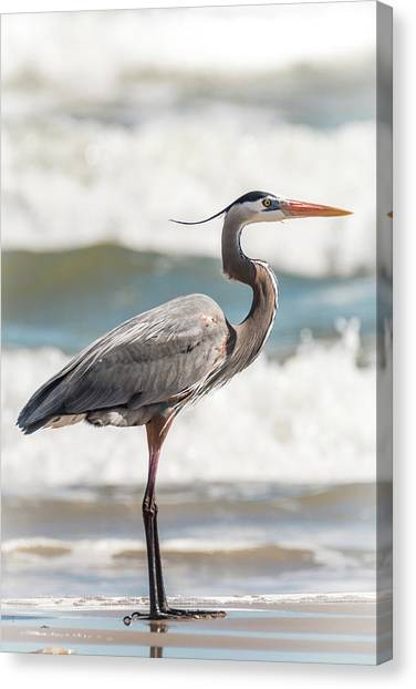 Canvas Print featuring the photograph Great Blue Heron Profile by Patti Deters