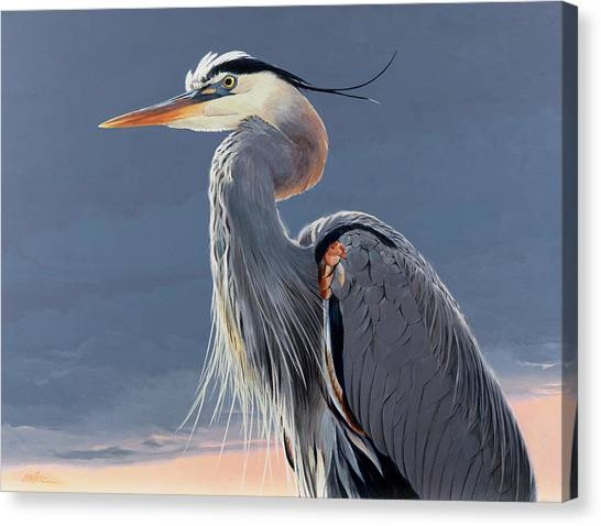 Herons Canvas Print - Great Blue Heron by Shawn Shea