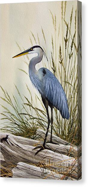 Heron Canvas Print - Great Blue Heron Shore by James Williamson