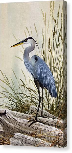 Great Blue Heron Shore Canvas Print