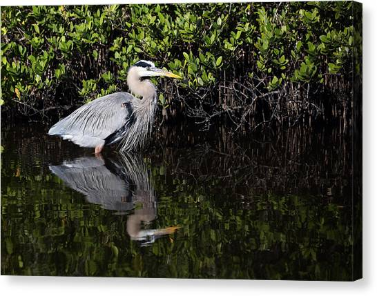 Canvas Print featuring the photograph Great Blue Heron With Reflection by Jean Clark