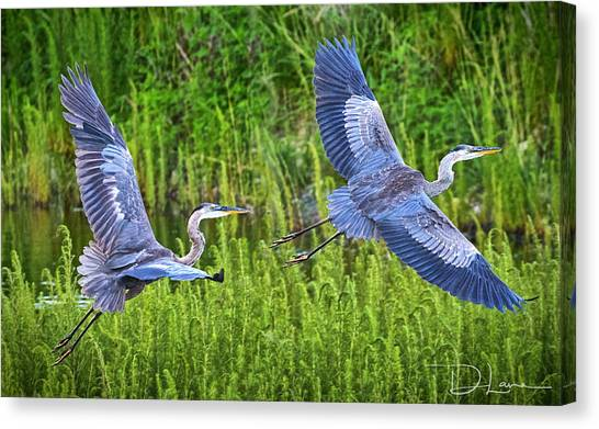 Great Blue Herons Canvas Print