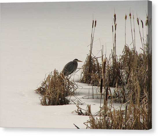 Great Blue In White Canvas Print by Athena Ellis
