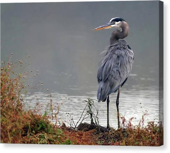 Great Blue Heron Landscape Canvas Print