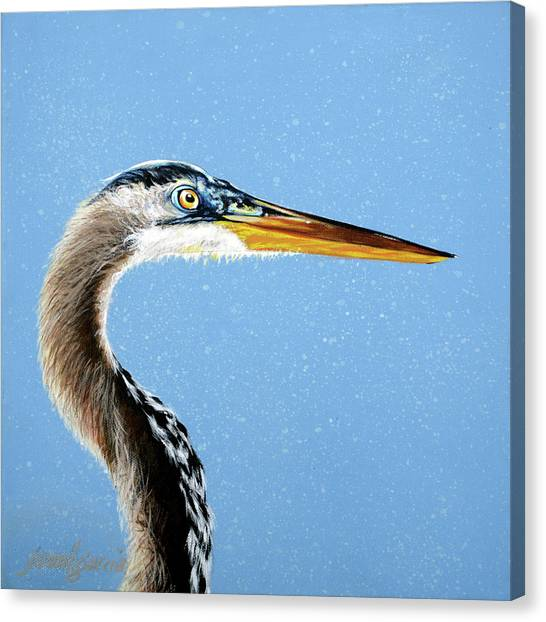 Great Blue Walter Canvas Print