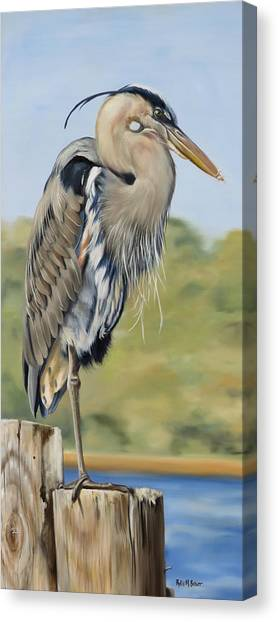 Great Blue Heron Standing Canvas Print