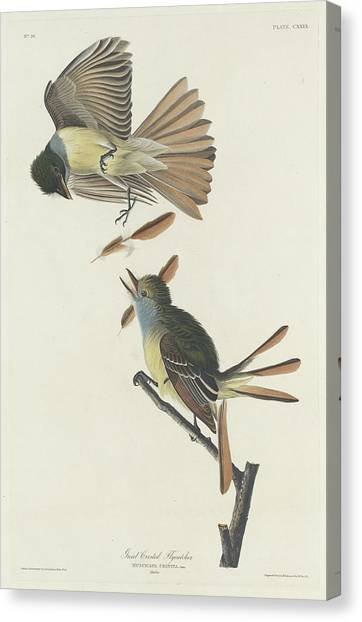Flycatchers Canvas Print - Great Crested Flycatcher by Dreyer Wildlife Print Collections