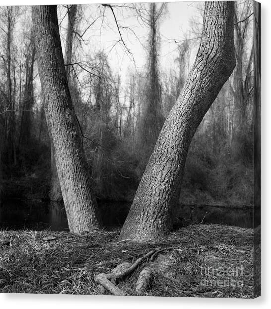 Great Dismal Canvas Print - Great Dismal Swamp by Elisa Maple