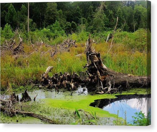 Great Dismal Canvas Print - Great Dismal Swamp, Virginia by Michael Potts