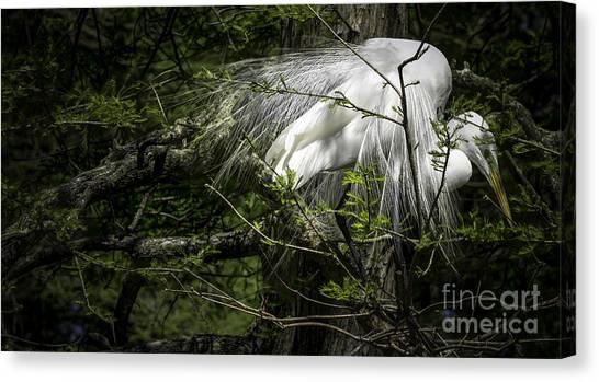 Great Egret #2 Canvas Print