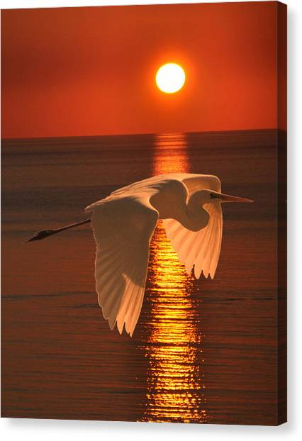 Great Egret At Sunset Canvas Print