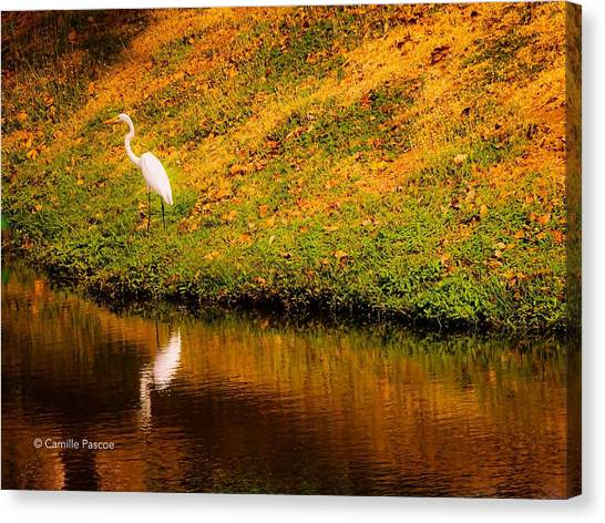 Great Egret At The Lake Canvas Print
