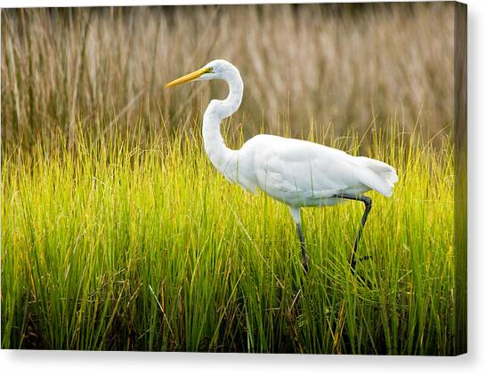 Great Egret In Cedar Point Marsh Canvas Print