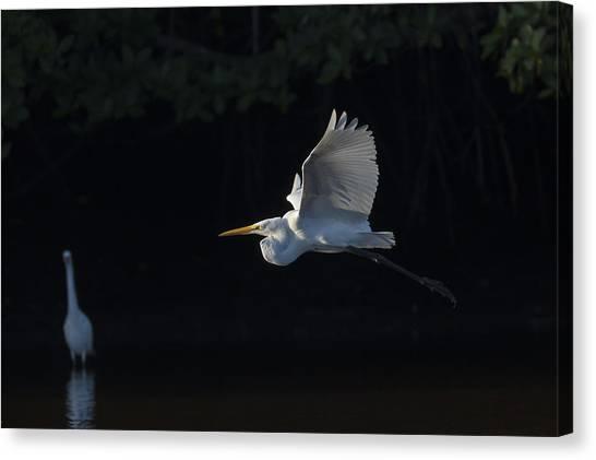 Great Egret In Morning Flight Canvas Print