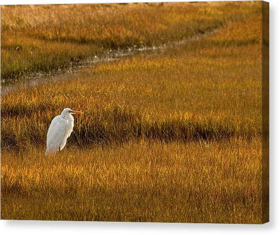Great Egret In Morning Light Canvas Print