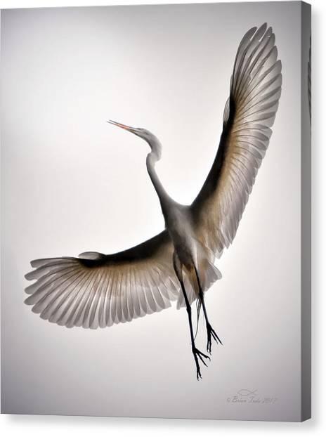Great Egret Majesty Canvas Print